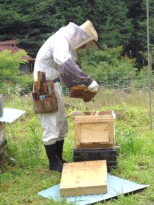 養蜂画像2